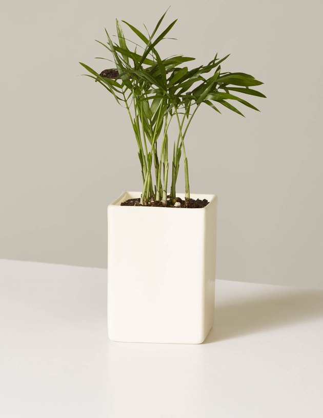 plant in mini planter