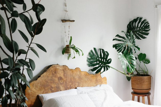 live wood headboard plant lady room