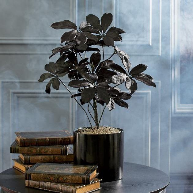 faux black plant