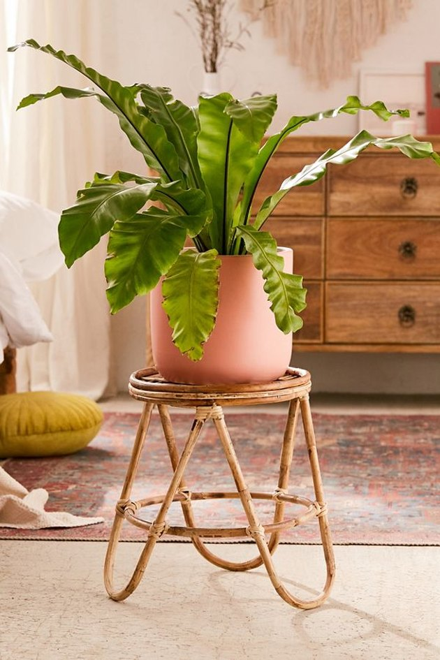 rattan stool  with plant on top