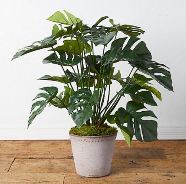 Terrain Faux Split Leaf Philodendron Plant