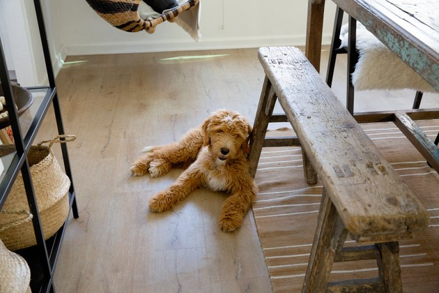 Puppy on wood floor next to wood dining room bench