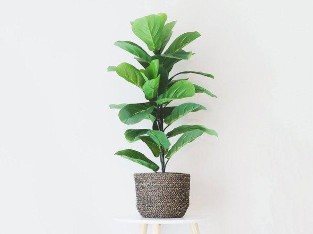 Fake Fiddle Leaf Fig Tree Floor Plant in Pot