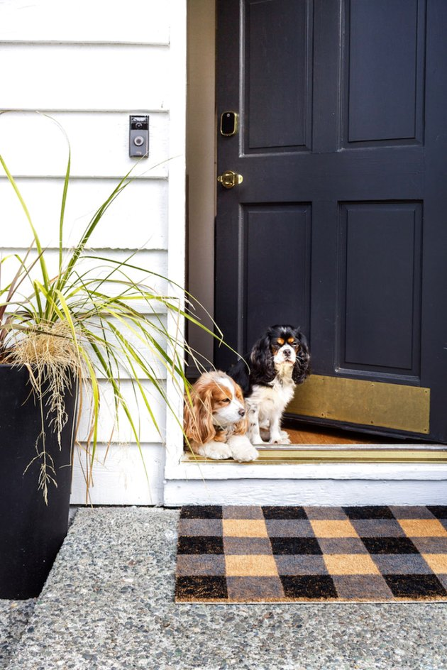 Buffalo check fall doormat with potted plant and dogs
