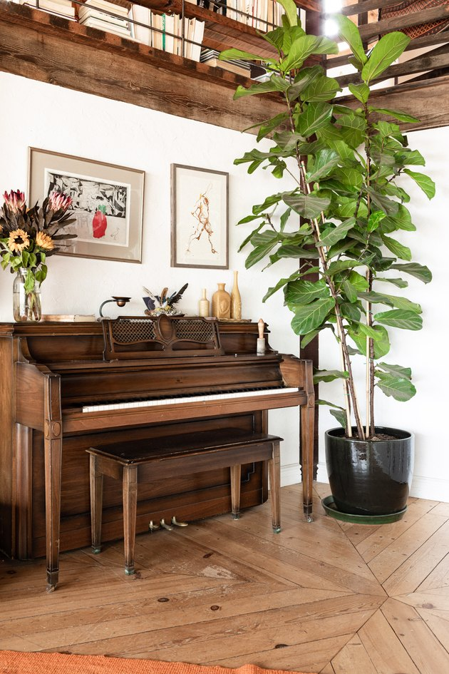 Piano and tall plant