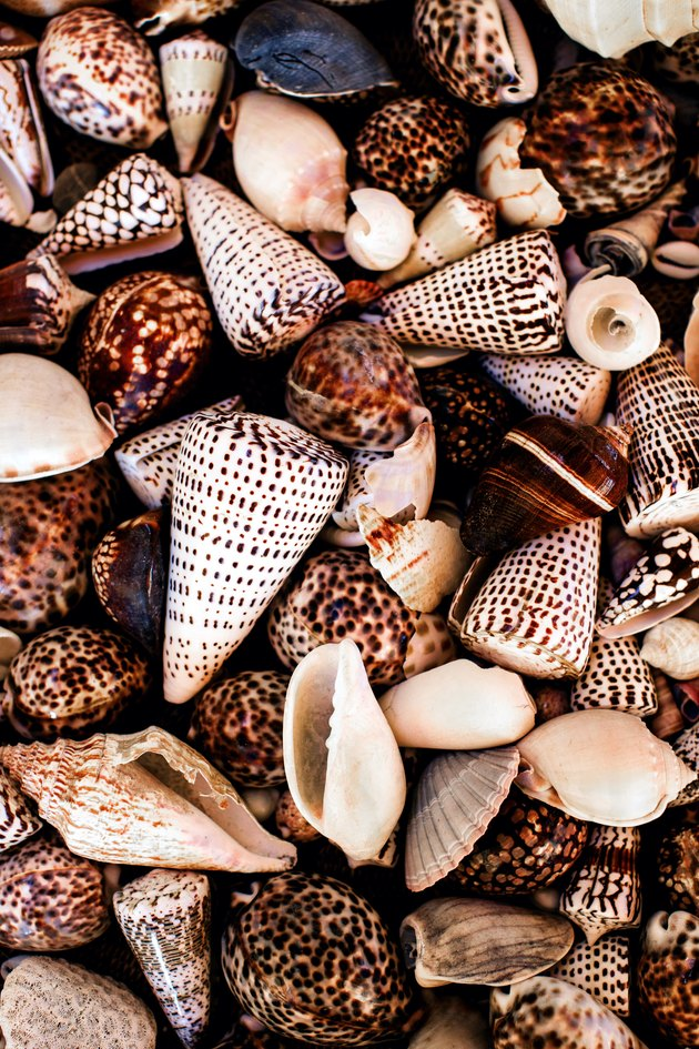 Kara Rosenlund collected seashells detail