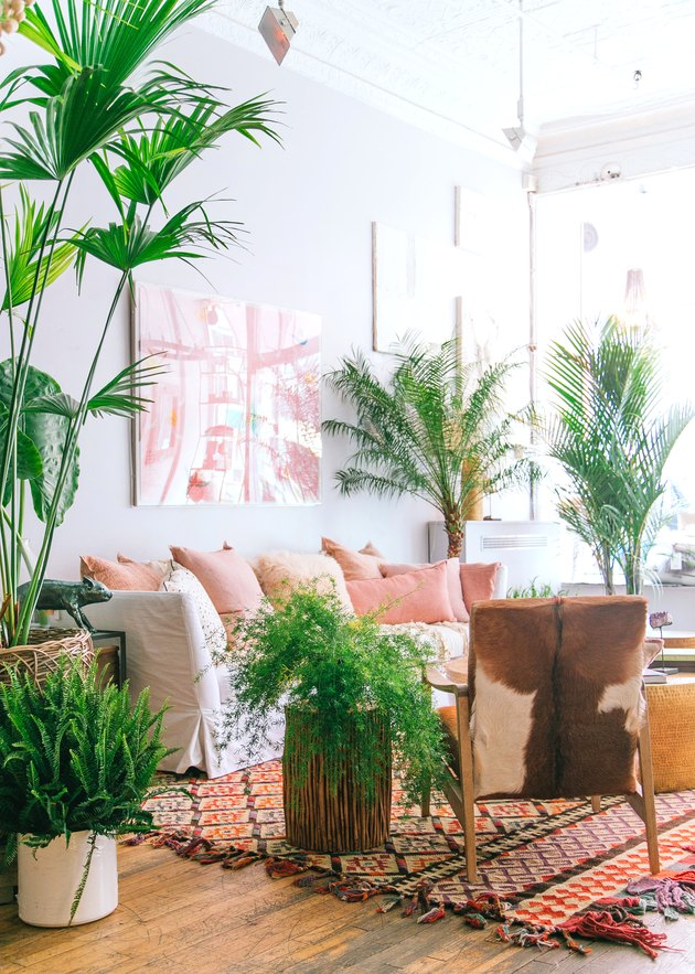 tropical living room with area rug and lots of greenery