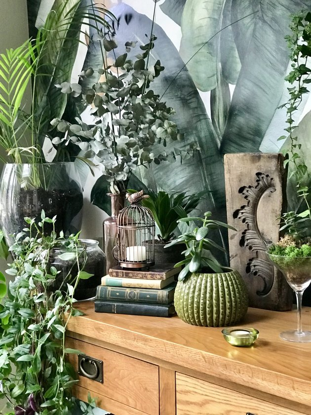 plant photo accent wall as backdrop for lush plants and greenery
