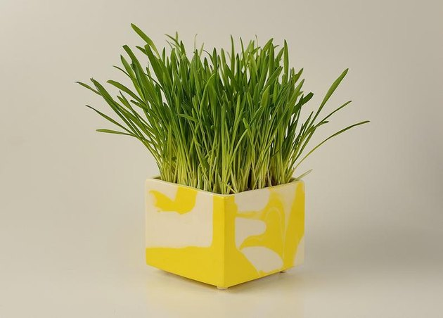 yellow square planter with plant