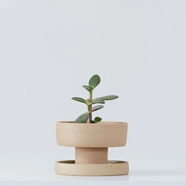 clay planter with small plant