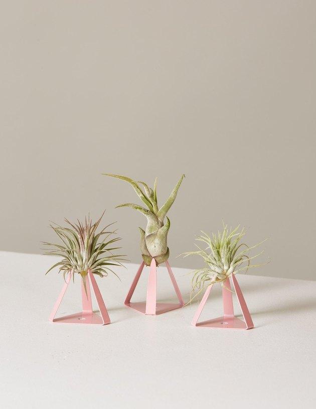 the sill air plants