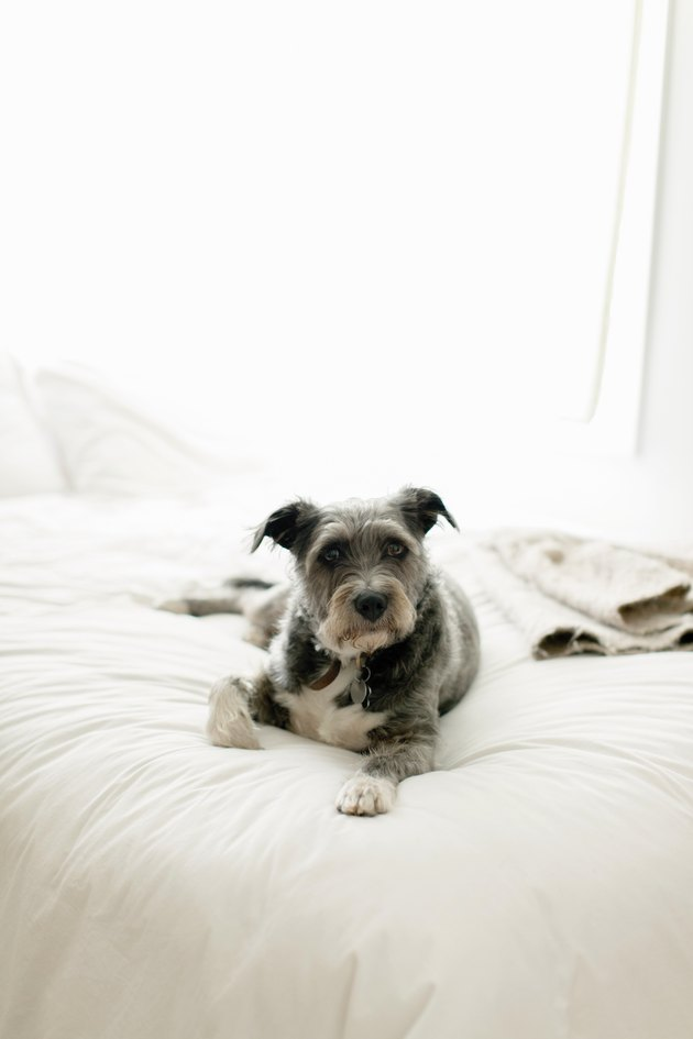Dog sitting on a bed