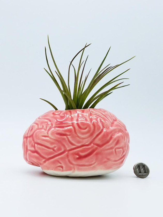 Brain shaped succulent vase