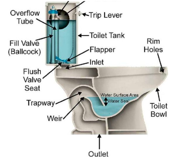 Cutaway of a standard toilet.