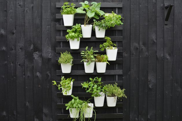 Outdoor vertical garden using IKEA bed slats, painted black.