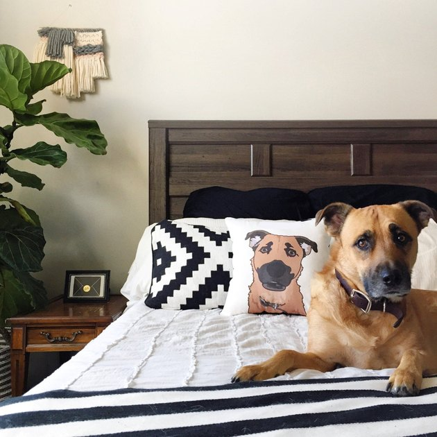 customized pet pillow with dog on bed