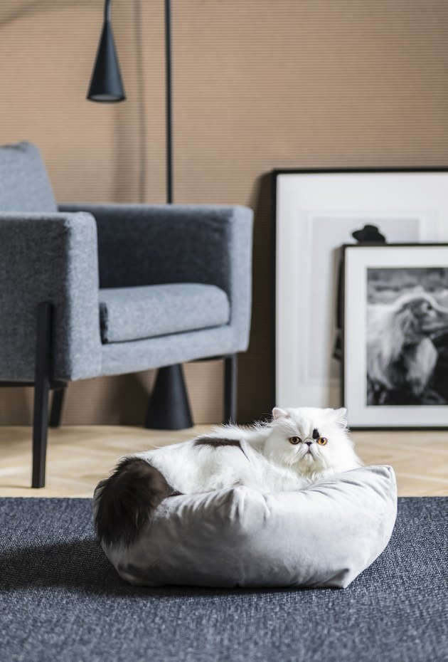 cat on pouf in living room space with gray chair in the background