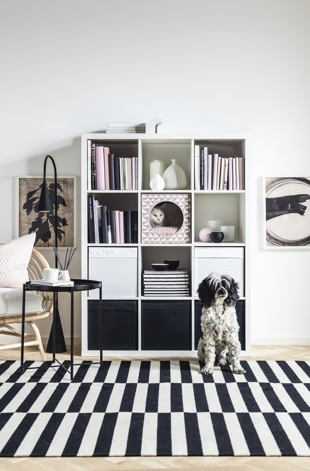cat and dog near black and white striped rug and white bookshelf