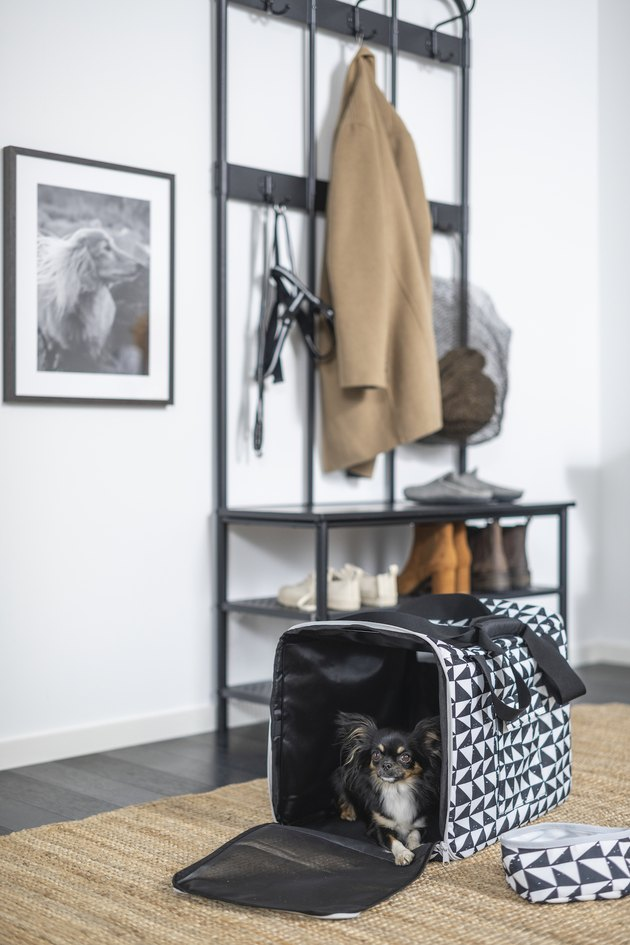 dog in travel bag near entryway closet
