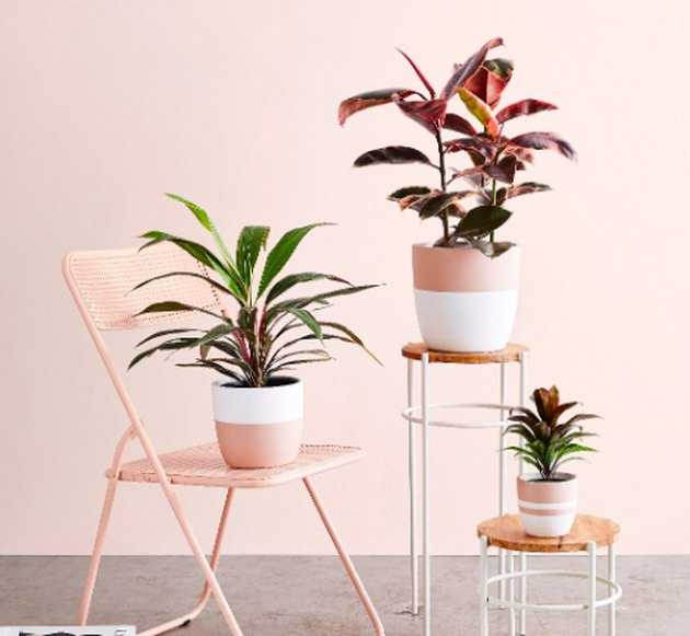 plants in planters, one on a pink chair