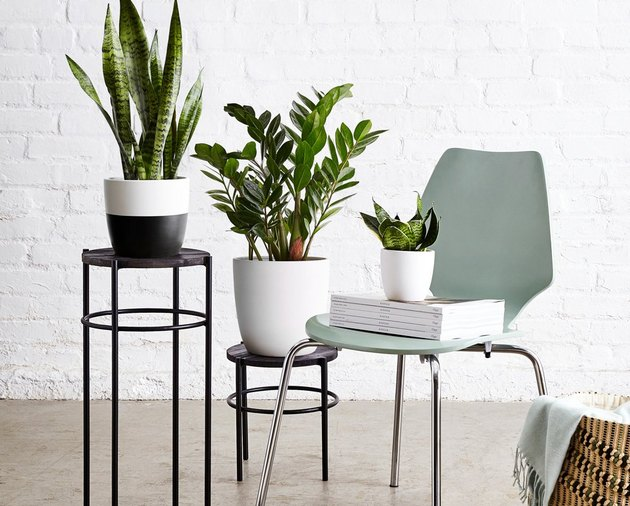 three plants in ceramic planters, one on a blue chair
