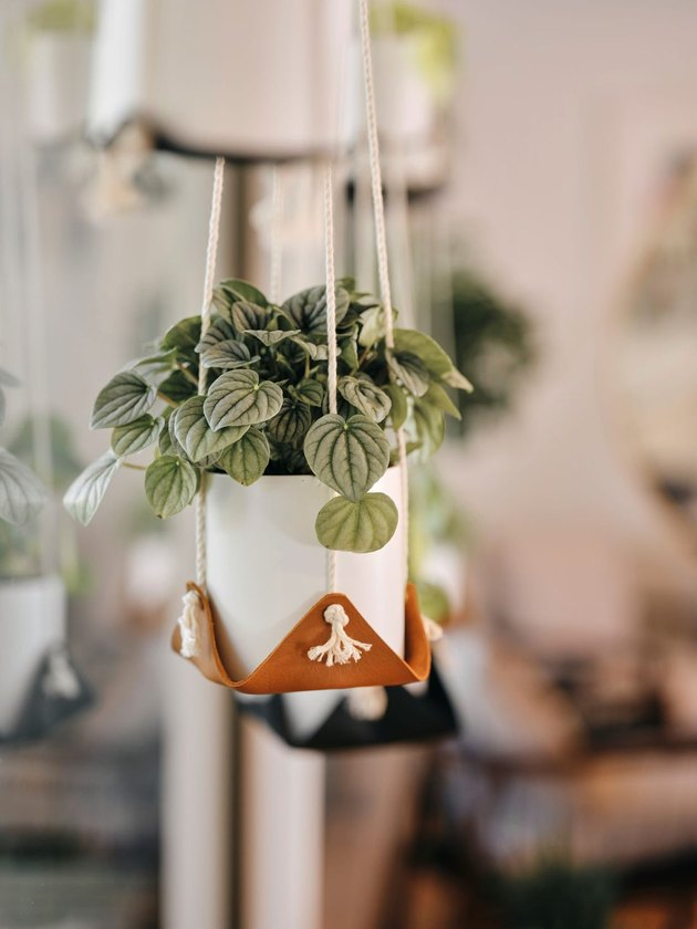brown leather plant hanger