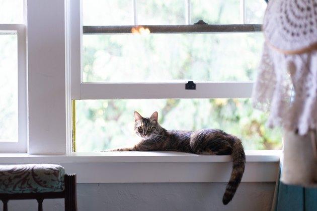 Cat lounging in open window