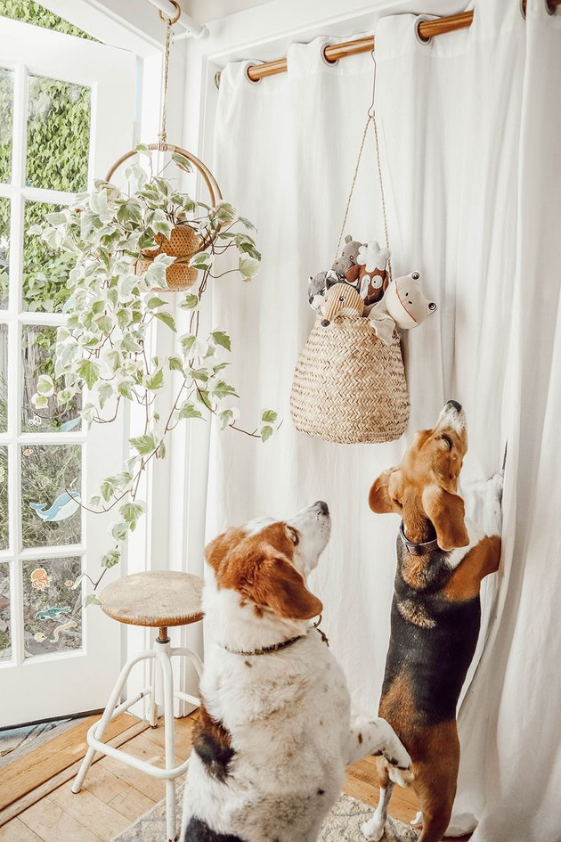 Bedroom with hanging dog toy storage and planters