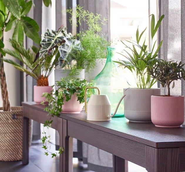 ikea plants and pots