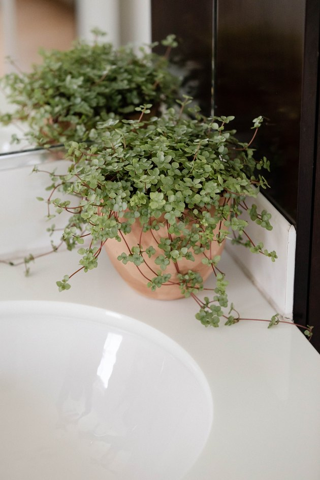 Plant on bathroom counter