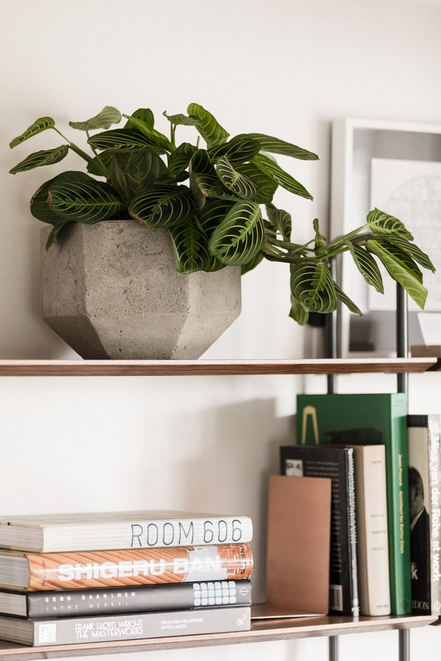 Plant on shelf