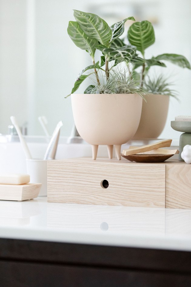 Bathroom counter with plant