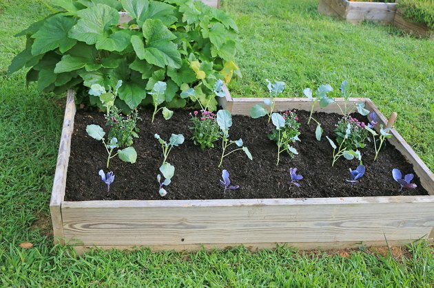 fall vegetables in raised garden bed