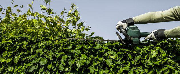 Hedge cutting with electrical trimmer