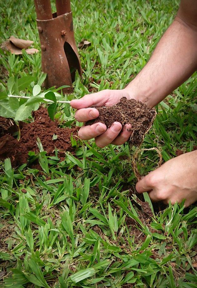 Planting a seedling