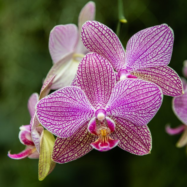 Orchids family plants