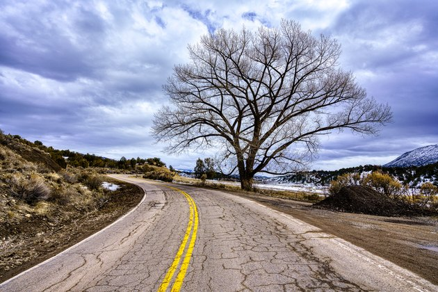 Road Curves with Cottonwood Tree and Moody Sky