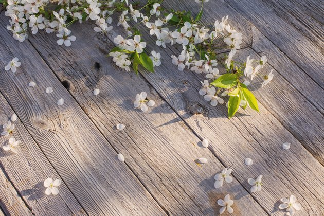 spring flowers on old wooden background