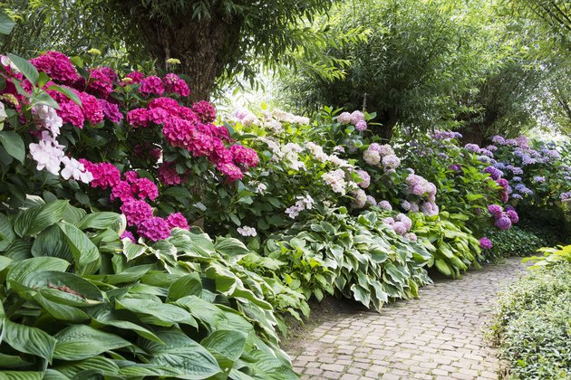 rhododendrons in english garden