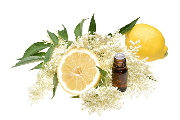 Elderflower, elderflower oil with lemon and leaves isolated on white background