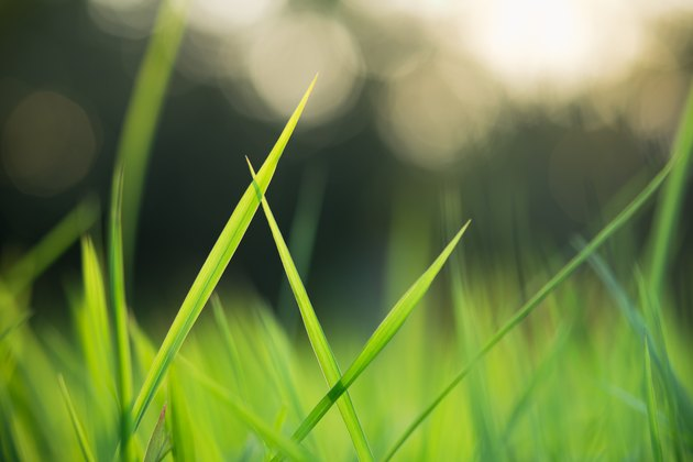 Abstract blurred of green grass on sunlight