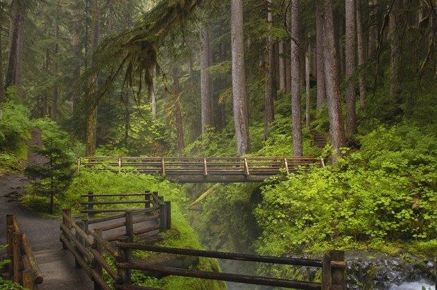 Bridge at Sol Duc Falls
