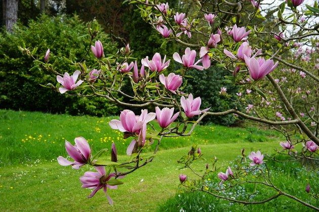 Beautiful Batsford Arboretum in Moreton-in-Marsh, Gloucestershire