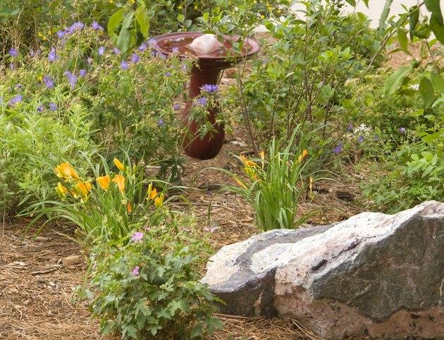 Xeriscape Summer Garden