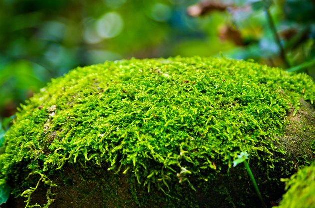 Green moss on stone in forest