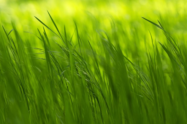 Grass in spring time