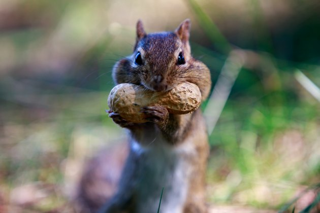 mouth full squirrel