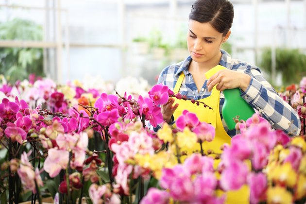 florist Woman hands with sprayer, spraying on flowers, take care