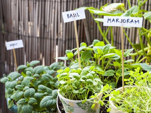 Herb garden on a balcony