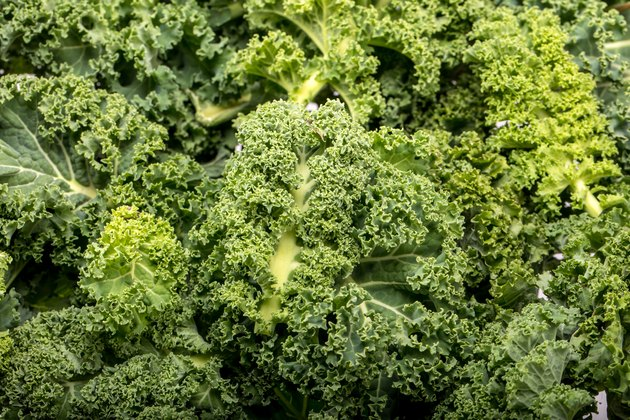 A healthy fresh curly kale.